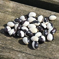 French Bean Yin Yang Seeds