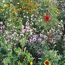 Native Wildlife Attracting Mix Seeds