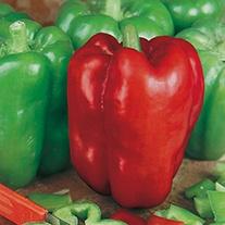 Pepper (Sweet) Giant Bell Seeds