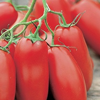 Tomato Follia F1 Seeds