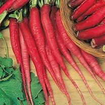 Radish Candela di fuoco Seeds
