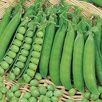 Pea Douce Provence Seeds