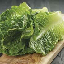 RHS Lettuce Cosmic
