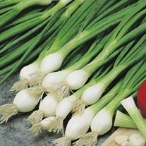 RHS Onion (Spring) Elody