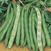 RHS Broad Bean Imperial Green Longpod Seeds