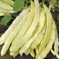 RHS Climbing French Bean Golden Gate
