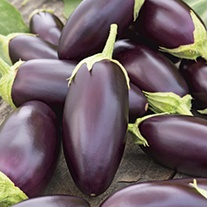 Mr Fothergills Aubergine Black Beauty Seed