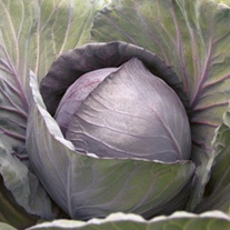 Cabbage (Red) Romanov F1