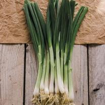 RHS Onion (Spring) Matrix