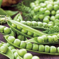 RHS Pea Starlight Seeds
