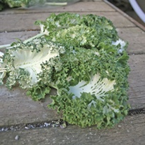Kale Emerald Ice