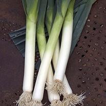 RHS Leek Porbella Vegetable Seeds