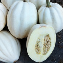 Squash (Winter) Mashed Potato Vegetable Seeds