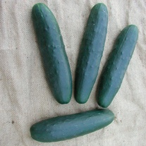 Cucumber Lili F1 Vegetable Seeds