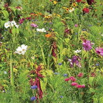 RHS Flowers For Birds Mix