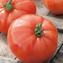 Tomato (Beefsteak) Supersteak F1 Vegetable Seeds