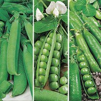 Pea Season Long Cropping Seed Collection