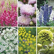Top Vase Cut Flower Seed Collection