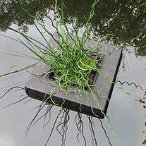Floating Pond Plant Basket 25cm x 2