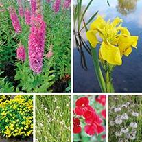 Aquatic Plant Wildlife Collection