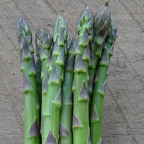Asparagus Guelph Eclipse Crowns