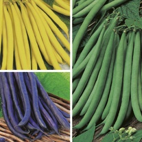 Dwarf French Bean Plant Collection