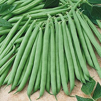 Dwarf French Bean Primavera Plants