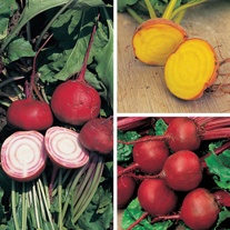 Beetroot Plant Collection
