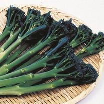 Broccoli Tenderstem F1 Plants