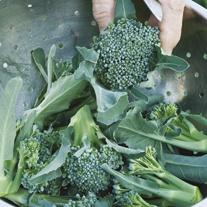 Broccoli Stromboli F1 Plants