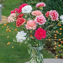 Perpetual Carnation Plant Collection