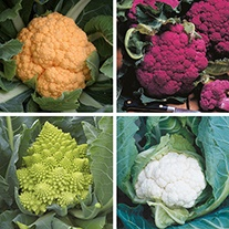 Cauliflower Plant Collection