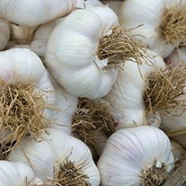 Garlic Extra Early Wight Bulbs (Softneck)
