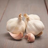 Garlic Flavor (Softneck)