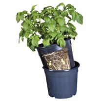 Potato Growing Pots (3 pots)