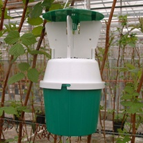 Raspberry Beetle Trap