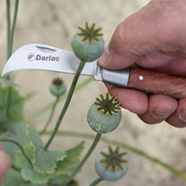 Darlac Pruning/Pocket Knife