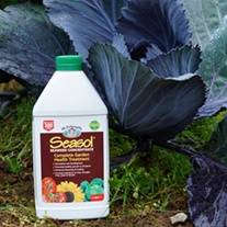 Seasol Organic Seaweed Concentrate
