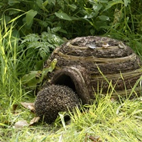 Igloo Hedgehog Habitat