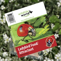Ladybird Attractant