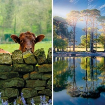 BBC CountryLife Greeting Cards