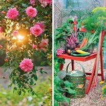 BBC Gardeners' World Greeting Cards