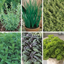 Cooks Essential Kitchen Herb Collection