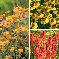 Hot and Fiery Plant Collection