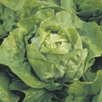Lettuce Clarion