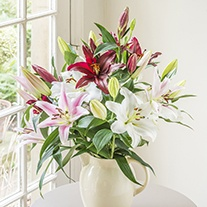 Mixed Scented Oriental Lilies