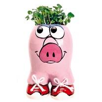 Munakuppi Pig Grow Kit