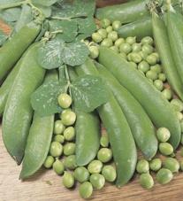 Pea Alderman Plants