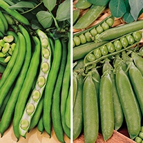 Overwintering Pea and Bean Plant Collection