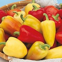 Pepper (Sweet) Antohi Romanian